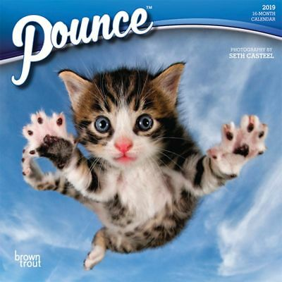 2019 Pounce 2019 Mini Wall Calendar, Kittens by BrownTrout