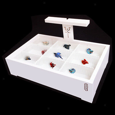 Tank Betta Incubator Isolation Box Fish Hatching Isolation Box White