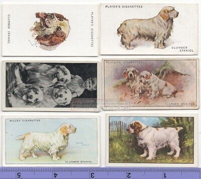 Clumber Spaniel Dog 6 Different Vintage Ad Trade Cards #3 Canine Pet
