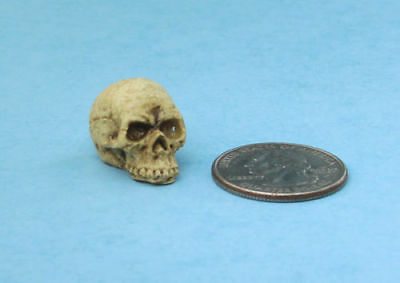 NEW 1:12 Scale Dollhouse Miniature Human Skull Halloween Decoration! #TH93606