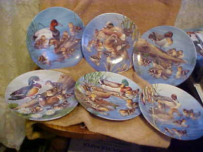 6 Ducks Collector Plates Nature's Nursery ~  1~6 By Knowles  ****