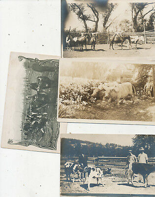 522 lot  lot OF 7 RPPC PHOTO POSTCARDS OF ANIMALS HORSE COWS CHIPMUNKS OXEN