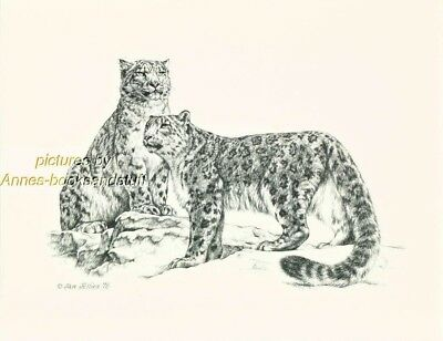 #189 SNOW LEOPARDS * wild life art print *  pen and ink drawing by Jan Jellins