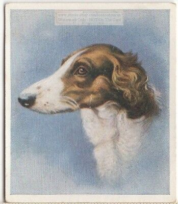 Borzoi Russian Wolfhound Dog Pet Animal Canine c80 Y/O Trade Ad Card