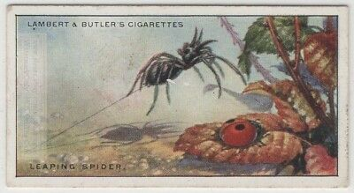 Leaping Jumping Spiders 85+ Y/O Trade Ad Card