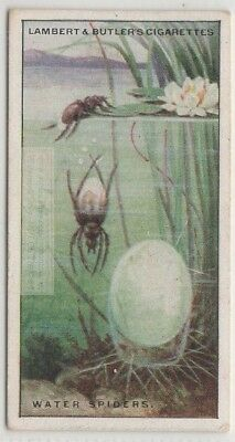 Diving Bell Water Spider 85+ Y/O Trade Ad Card