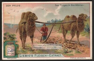 Farm Plowing With Camels In Asia Farming c1903 Trade Ad Card