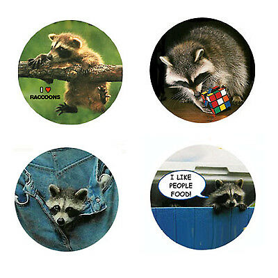 Raccoon Magnets-A:  4 Charming Raccoon Magnets for your home or Collection