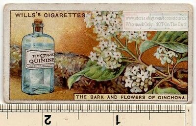 Quinine Bark And Flowers of Cinchona 90+  Y/O Ad Trade Card