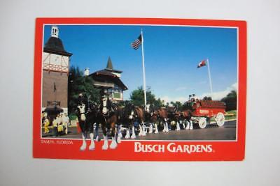 409) Tampa Florida ~ Budweiser Beer Wagon ~ Anheuser Busch Clydesdales Horses