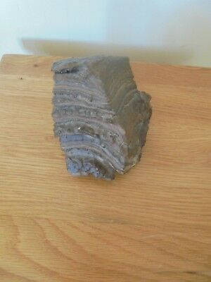Collectable small piece of Fossilized Wood Specimen,very heavy