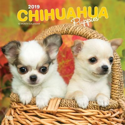 2019 Chihuahua Puppies Wall Calendar, Chihuahua by BrownTrout