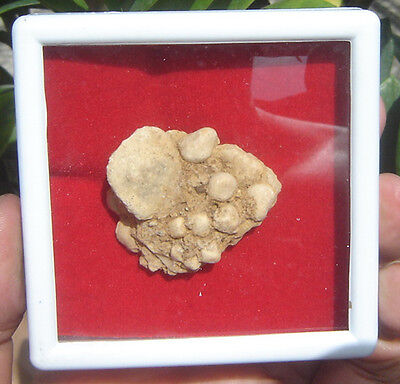 "Huge Box Relic stone  Buddha"" Egg in stone""Kow  Samroiyod Mountain Amulet #"