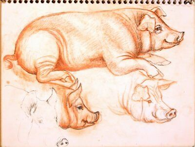 Maureen Love Original Multiple Pigs Sketches