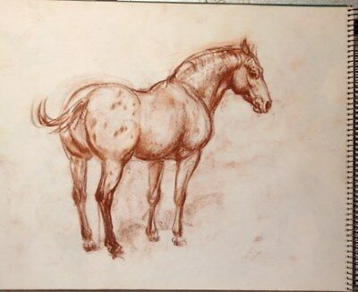 Maureen Love Original Appaloosa Sketch