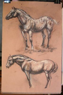 Maureen Love Original Appaloosa Horses Sketches