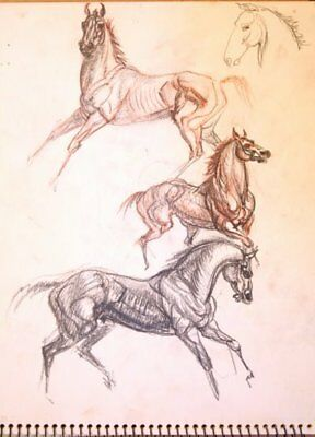 Maureen Love Original Action Horses Sketches