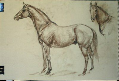 Maureen Love Original Bear/Horse Sketches