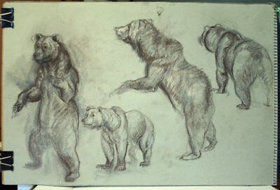 Maureen Love Original Bear/Squirrel Sketches