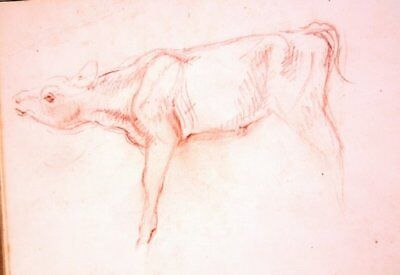 Maureen Love Original Calf/Pig Sketches