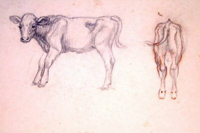 Maureen Love Original Calf Sketches