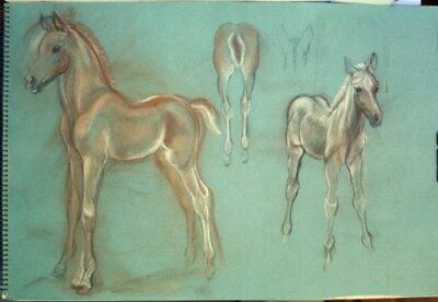 Maureen Love Original Colt/Filly Sketches
