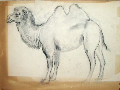Maureen Love Original Camel Sketch