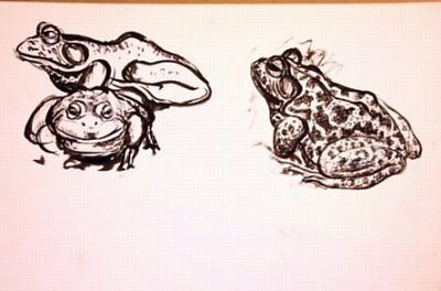 Maureen Love Original Frog Sketches