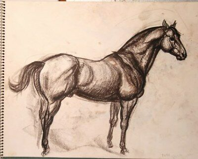 "Maureen Love Original Horse ""Poco"" Sketch"