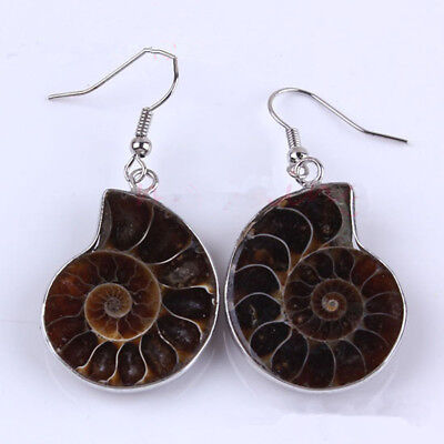 Natural Ammonite Slice Shell Gemstone Dangle Hook Earrings