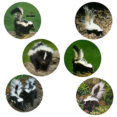 Skunk Magnets:   6 Cool Skunks  for your Collection--A Great Gift