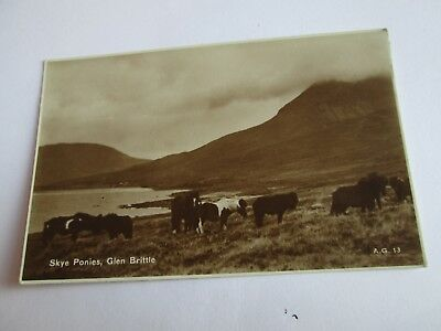 Postcard of Skye Ponies, Glen Brittle (RP Unposted Valentine's)