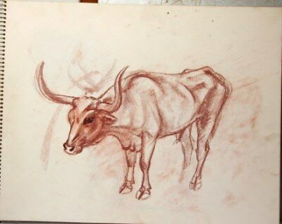 Maureen Love Original Longhorn/Horse Sketches