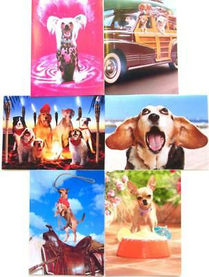 DOG THEMED BIRTHDAY CARD Avanti Press FUNNY BRIGHT DOGS