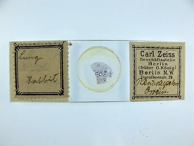 Antique Microscope Slide by Carl Zeiss. Lung of Rabbit.