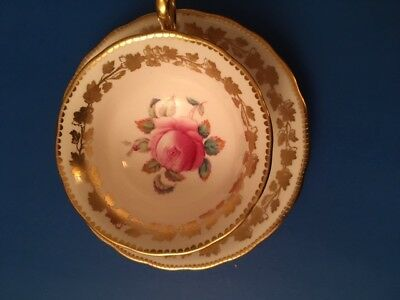 Royal Chelsea Tea Cup and Saucer Beautiful Rose in Cup