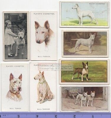 Bull Terrier Dog 8 Different Vintage Ad Trade Cards #3 Canine Pet