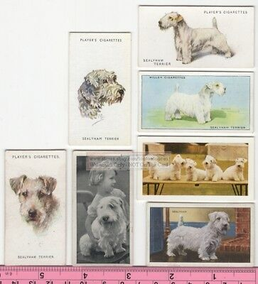 Sealyham Terrier Dog 7  Different Vintage Ad Trade Cards #3 Canine Pet