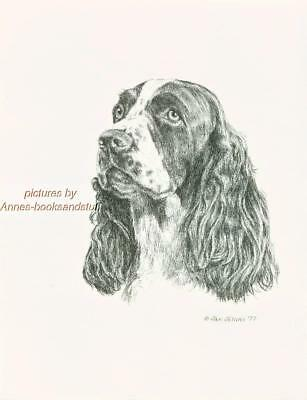 #157 ENGLISH SPRINGER SPANIEL dog art print * Pen and ink drawing by Jan Jellins