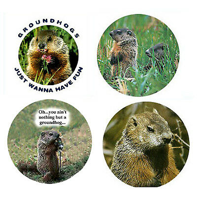 Groundhog Magnets: 4 Great Groundhogs for your Fridge or Collection-A Great Gift