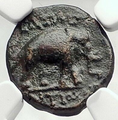 ANTIOCHOS III the Great 222BC Rare R2 Seleukid Greek Coin w ELEPHANT NGC i73044
