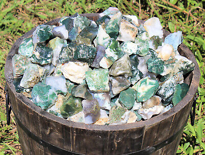 500 Carat Lot Bulk Natural Rough Tree Agate (Raw Crystal Rock Mineral 100 Grams)