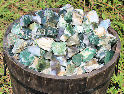 1000 Carat Lot Bulk Natural Rough Tree Agate, Raw Crystal Rock Mineral 200 Grams