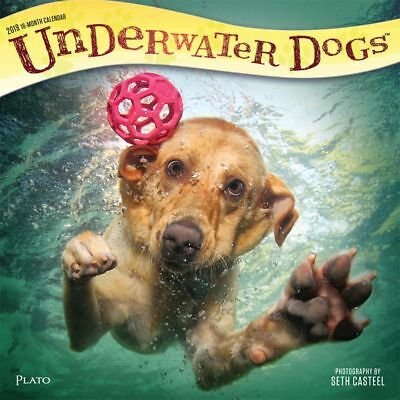 2019 Underwater Dogs Wall Calendar,  by BrownTrout