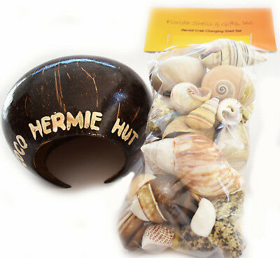 """Hermit Crab Starter Kit 35 Assorted Shells (1/2""""-1"""" opening) + Large Hermie Hut"""