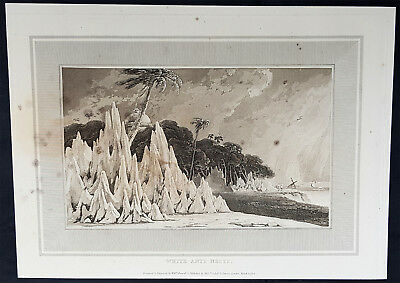 1809 William Daniell Antique Print of Termite of White Ant Nests or Mounds