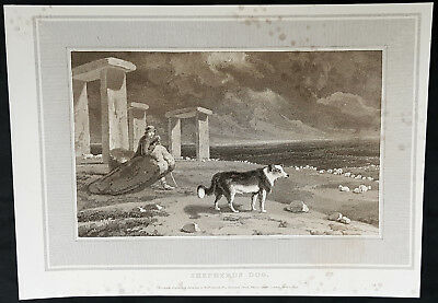 1809 William Daniell Antique Print of a Working Sheep Dog at Stonehenge