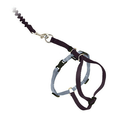 PetSafe COME WITH ME KITTY Cat Harness and Bungee Leash Black Small