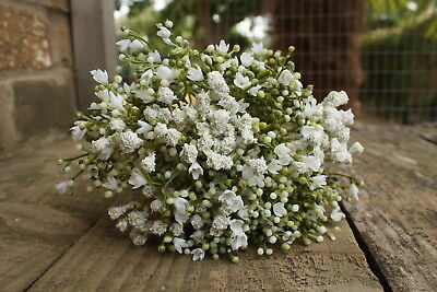6 x ARTIFICIAL IVORY GYPSOPHILA SPRAYS  WIRED STEMS 28cm