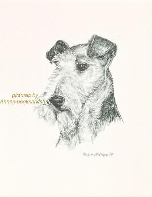 #219 WIRE HAIRED FOX TERRIER dog art print * Pen and ink drawing by Jan Jellins